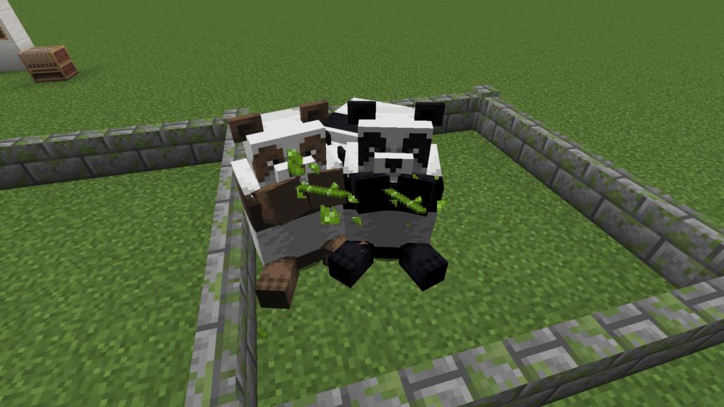Panda_fressen_Bambus